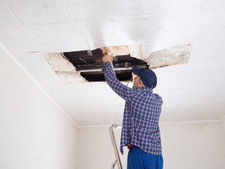 Mold Damage and Repair